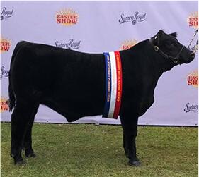 RAS show steer 2019